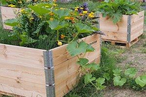 Gärtnern für die Gesundheit